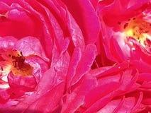 диаграмма малое смычков букетов картины цветка безшовное Стоковое Изображение