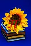 Диаграмма синь катушки физики математики золотого раздела тетради дневника книги цветка солнца pi номера растущая в марше учебног стоковые изображения rf