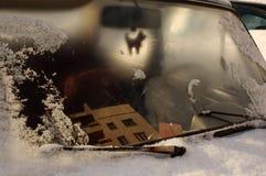 Диаграмма собаки внутри старого автомобиля Стоковое фото RF
