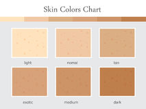 Диаграмма цветов кожи Стоковое Фото