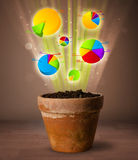 Диаграммы приходя вне от цветочного горшка Стоковая Фотография