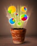 Диаграммы приходя вне от цветочного горшка Стоковое Фото