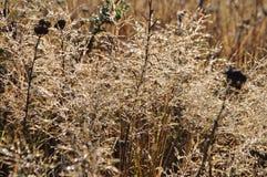 Диаманты леса утра орошают на траве Стоковое фото RF