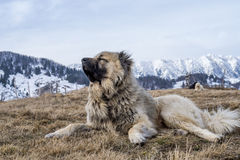 Дива горы Стоковое Изображение
