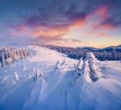Дивный восход солнца зимы в прикарпатских горах с крышкой снега Стоковое Фото