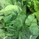 Дивный зеленый цвет мустарда, дивная хорошая еда Стоковое Фото