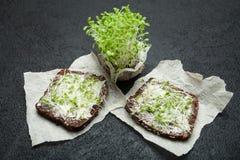 Диетическая закуска для потери веса и detoxification Микро- зеленые цвета на черной предпосылке стоковое изображение rf