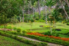 Дизайн ландшафта ослабляет тропический сад Стоковая Фотография RF