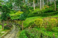 Дизайн ландшафта ослабляет тропический сад Стоковое Изображение
