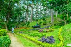 Дизайн ландшафта ослабляет тропический сад Стоковое фото RF