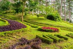 Дизайн ландшафта ослабляет тропический сад Стоковые Фотографии RF