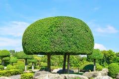 Дизайн ландшафта сада Стоковые Изображения