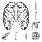 Дизайн вектора биологии и медицинского логотипа Собрание биологии и каркасной иллюстрации вектора запаса иллюстрация вектора