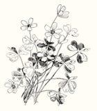 Дизайн весны с цветками леса вектор Справочная информация Стоковое Фото