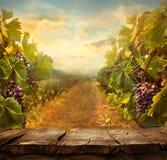 Дизайн виноградника Стоковое фото RF