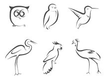 Дизайн выровнянный птицей иллюстрация штока