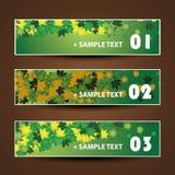 Дизайн знамени или заголовка - листья осени Стоковое Фото