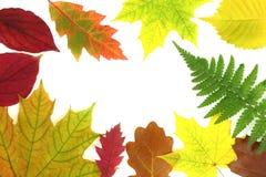 Дизайн листьев осени Стоковая Фотография