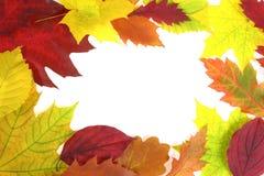 Дизайн листьев осени Стоковые Фото