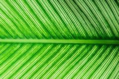 Дизайн лист Стоковые Фотографии RF