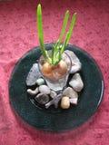 Дизайн камня лука Стоковые Фотографии RF