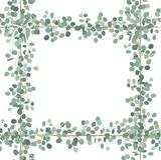 Дизайн карточки вектора флористический: Рамка лист растительности серебряного доллара евкалипта Квадратная элегантность декоратив иллюстрация вектора
