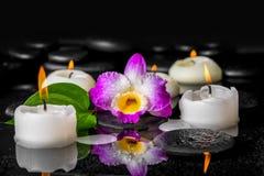 Дизайн курорта фиолетового dendrobium орхидеи, зеленых лист с росой Стоковые Фото