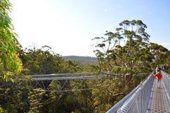 Дизайн моста верхней прогулки дерева уникально: Дания, западная Австралия Стоковое фото RF