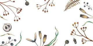 Дизайн осени предпосылки акварели с гербарием, пестрой листвой изолированной на белой предпосылке, Нарисованное вручную illustrat стоковое фото rf