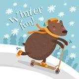 Дизайн поздравительной открытки с медведем на самокате Стоковые Фото