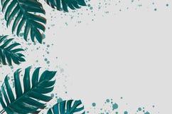 Дизайн предпосылки искусства концепции минимальный выходит извергу голубое тропическое и выходит в лето тропическое Leav живого с стоковые фото