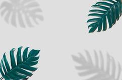 Дизайн предпосылки искусства концепции минимальный выходит извергу голубое тропическое и выходит в лето тропическое Leav живого с стоковое изображение rf