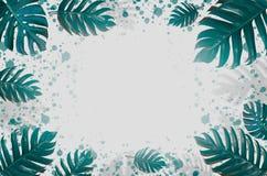 Дизайн предпосылки искусства концепции минимальный выходит извергу голубое тропическое и выходит в лето тропическое Leav живого с стоковые изображения