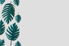 Дизайн предпосылки искусства концепции минимальный выходит извергу голубое тропическое и выходит в лето тропическое Leav живого с стоковое фото