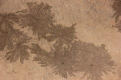 Дизайн пляжа Стоковые Изображения