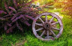 Дизайн сада с старым деревянным колесом и Бушем барбариса на заднем плане пруда стоковые фотографии rf