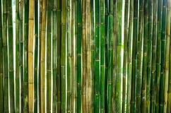 Дизайн стены Gree бамбуковый для домашнего украшения Стоковое фото RF