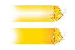 Дизайн текстового поля с бабочкой erotella dejone Vindula крейсера, изолят на белизне Стоковая Фотография RF