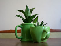 Дизайн украшения Первоначально цветочные горшки в форме чашек чая Стоковое Изображение
