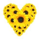 Дизайн цветка сердца сделанный из желтых изолированных солнцецветов на белизне Стоковая Фотография RF