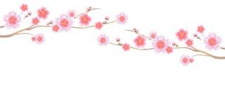 Дизайн цветков Ветви Сакуры изолировали на белой предпосылке цветки Apple-вала Цветение вишни Cmyk EPS 10 вектора Стоковое фото RF