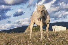 Дикая лошадь в природе стоковое фото rf