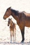 Дикая лошадь с котенком стоковые изображения rf