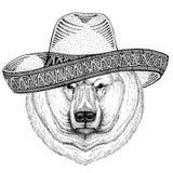 Дикие Запады иллюстрации партии мексиканськой фиесты sombrero дикого животного полярного медведя нося мексиканские Стоковое фото RF