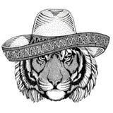 Дикие Запады иллюстрации партии мексиканськой фиесты sombrero одичалого дикого животного тигра нося мексиканские Стоковое Изображение RF