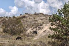 Дикие лошади пася в одичалом парке Стоковое Изображение RF