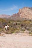 Дикие лошади в гористой пустыне Стоковые Изображения RF