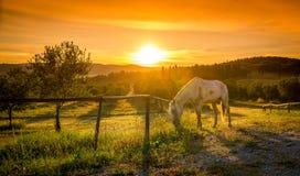 Дикие лошади и тосканский восход солнца Стоковая Фотография RF