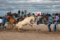 Дикие лошади на профессиональном родео Стоковая Фотография RF