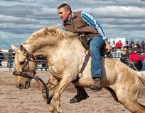 Дикие лошади на профессиональном родео Стоковые Фото